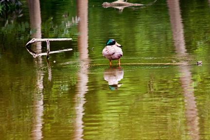 Mirroir au canard - Chateau de Mery